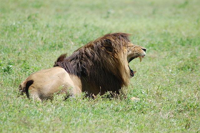 Joachim Huber _640px-Ngorongoro_Crater,_Tanzania_(2288738372).jpg