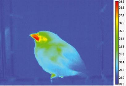 bird bill.jpg