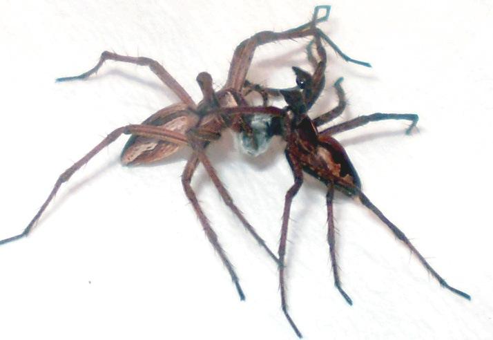 1321008025829-spiderswithgift.jpg