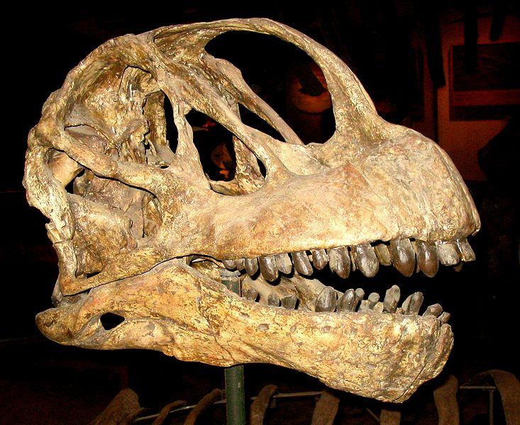 733px-Camarasaurus_lentus_미국 스미소니언 자연사박물관 소장_위키.jpg