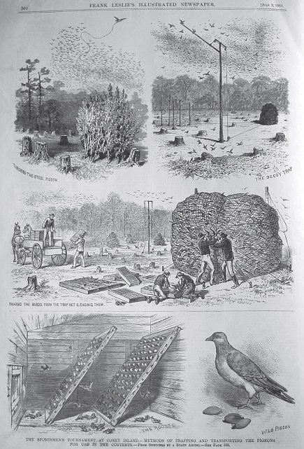 2 July 1881 edition of Frank Leslie's Illustrated News-1.jpg