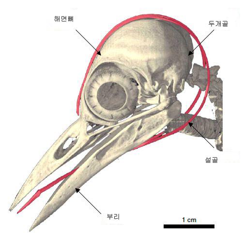 skull copy.jpg