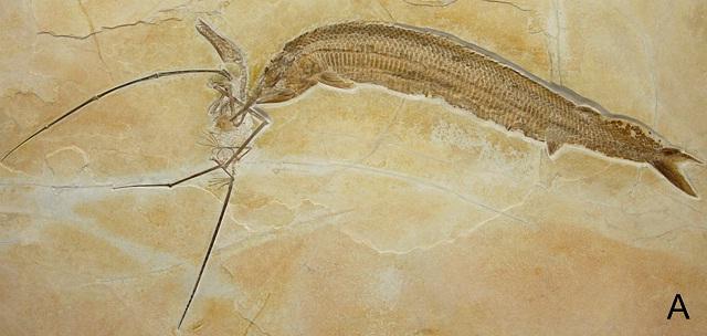 fossil1.jpg