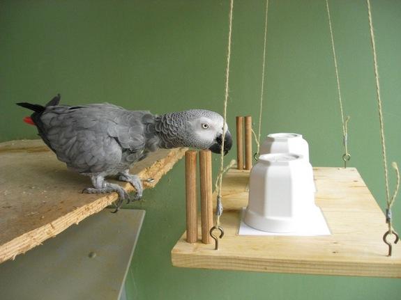 Sandra Mikolasch_parrot-experiment-110621.jpg