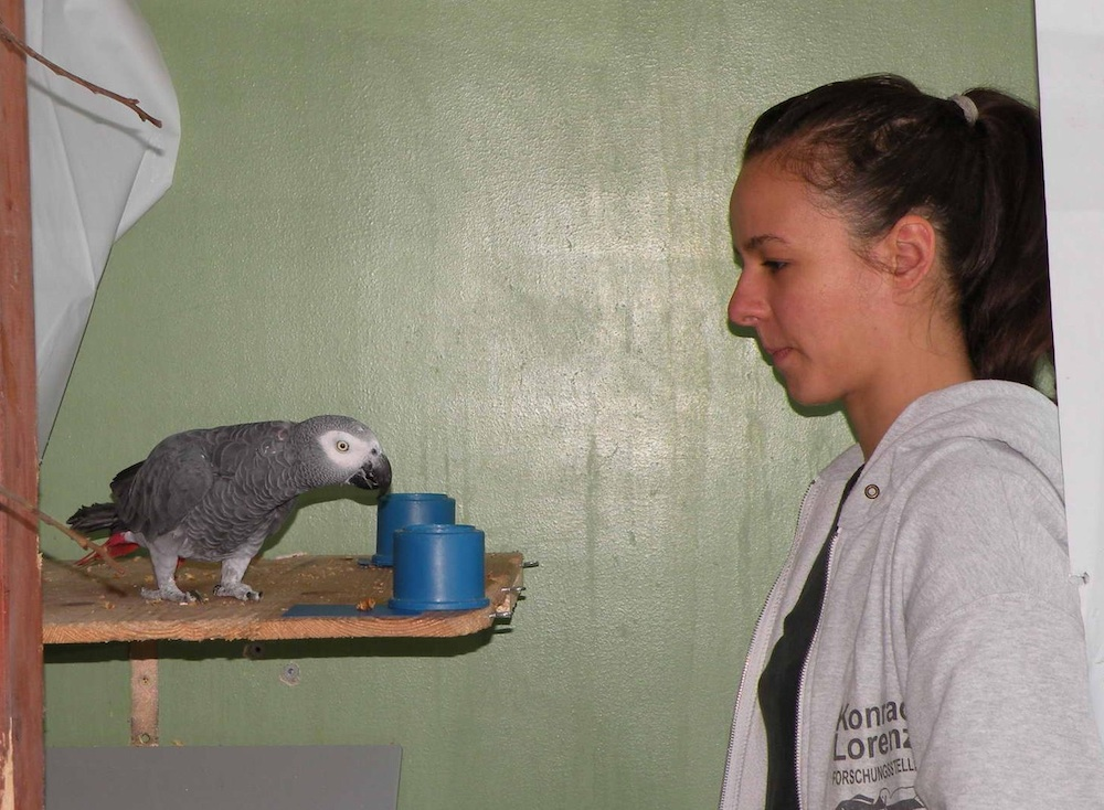 parrot-experiment-120807.jpg