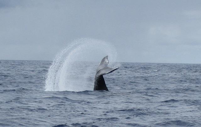 Whale_tail_flip.jpg