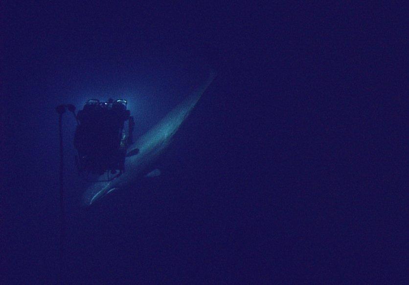 Ocean Exploration Trust6.jpg