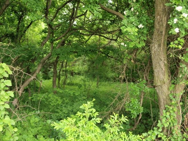 forest_inside.jpg