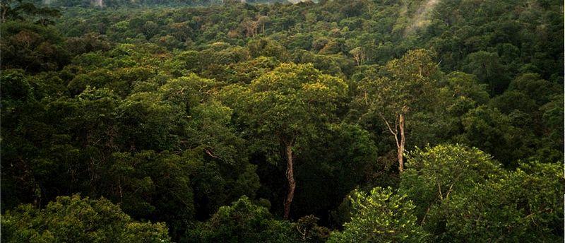 800px-Amazon_Manaus_forest.jpg