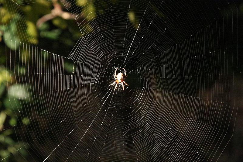 Gnissah-Araneus_diadematus_web_1.jpg
