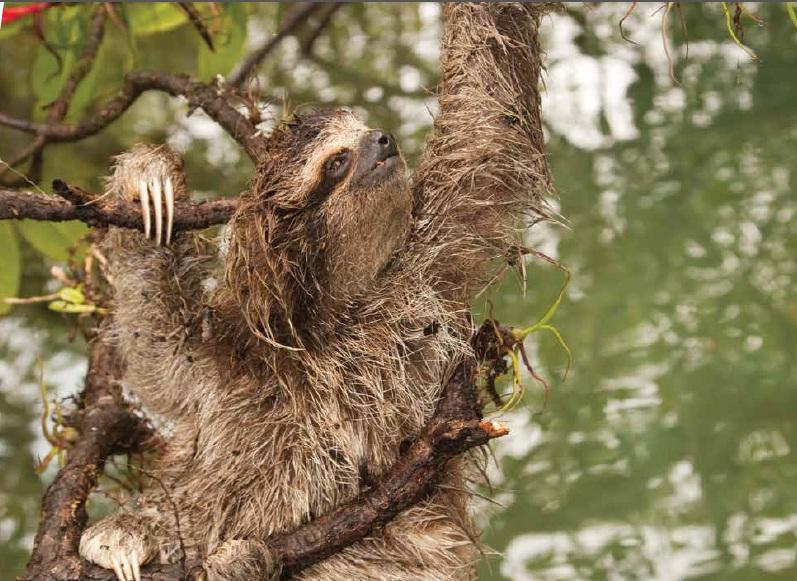 s_sloth.jpg
