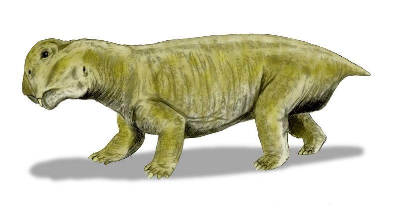 nobu tamura_Lystrosaurus murrayi, a dicynodont from the Early Triassic of South Africa, India and Antarctica_Lystrosaurus_BW.jpg