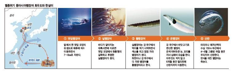 eel_picture.jpg
