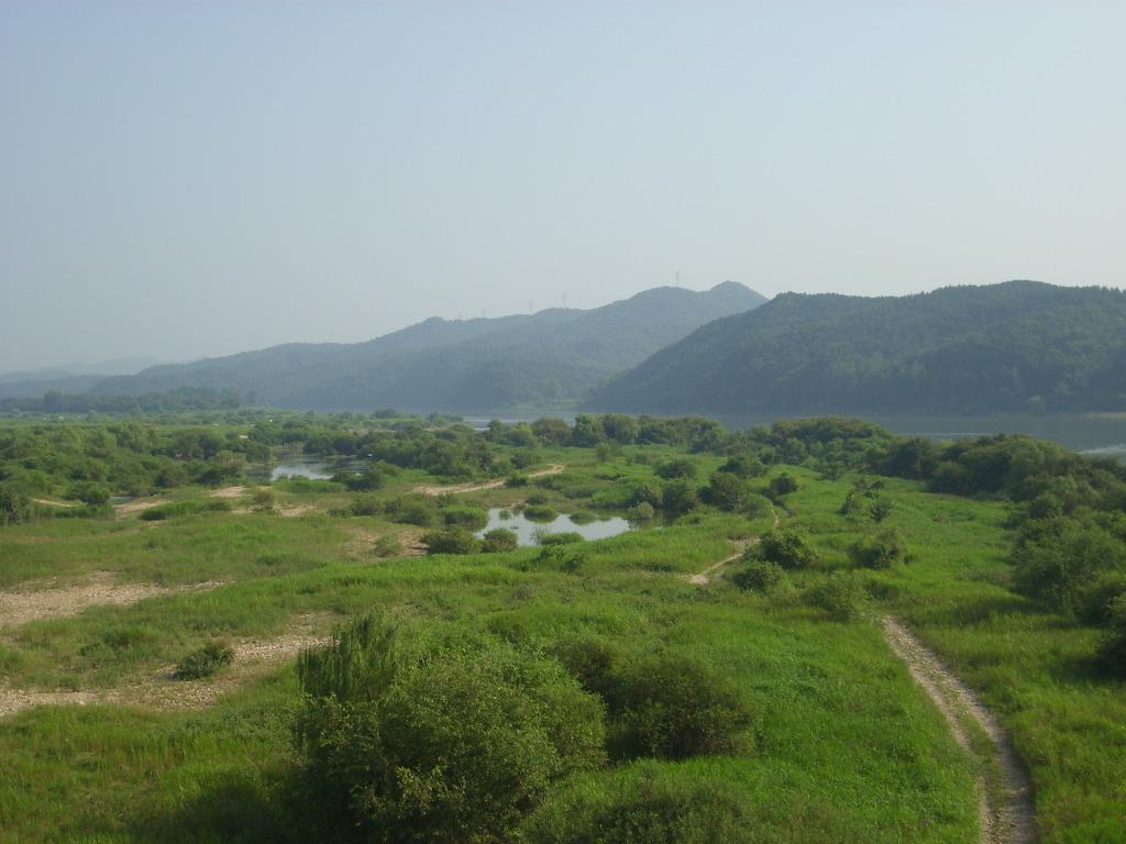wetland4.jpg