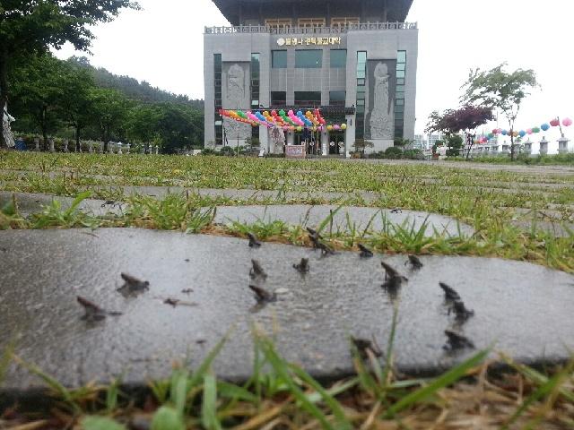 망월지새끼두꺼비대이동(3).jpg