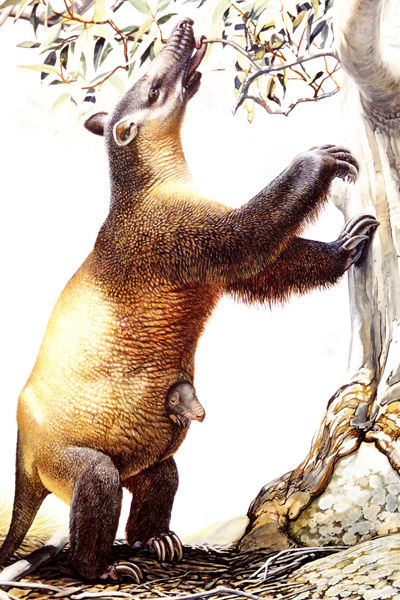 An artist's impression of the Palorchestes azael, a marsupial similar to a ground sloth that weighed about 500 kilograms (Peter Schouten).jpg
