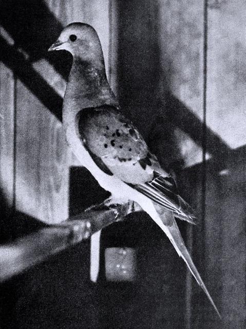 Bird_lore_(1913)_(14562557107).jpg