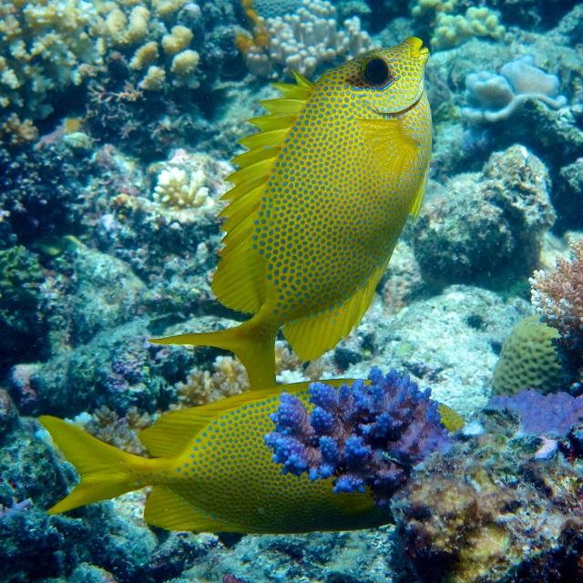 fish2_Jordan Casey2.jpg