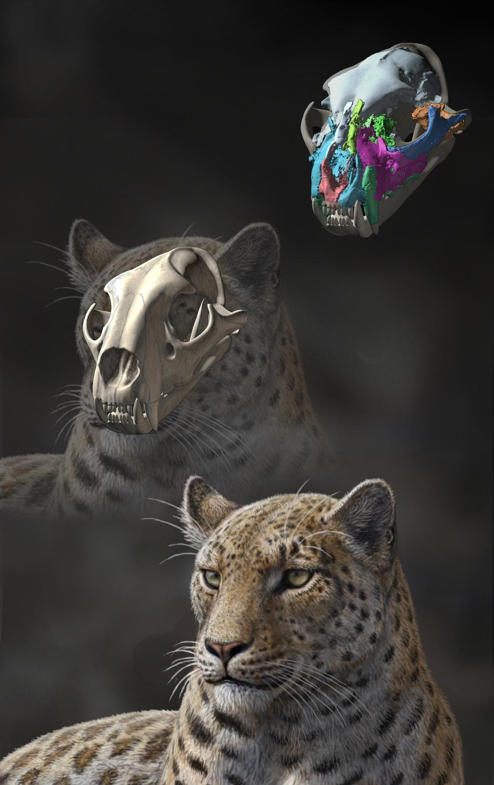 Panthera-blytheae-Mauricio-Anton.jpg
