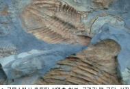 태백산 분지, '5억년 전 흔적' 바다 냄새 '솔솔'
