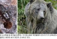 쌀알만한 딱정벌레가 500㎏ 곰 죽인다