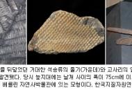 3억년 전 원시림의 선물, 석탄