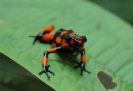 독개구리 미스터리, 자신과 몸속 기생충엔 무해