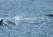 [단독] 돌고래쇼 하다 풀려난 '삼팔이' 야생번식 세계 최초 확인