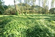 나무를 죽이는 풀…전국 하천에 '덩굴 대란'