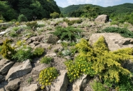 나라 안팎 1천 종 고산식물 보금자리