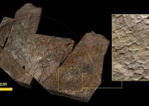 경남 거대공룡은 코끼리 발바닥 지녔다