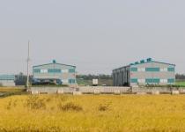 김포 홍도 평야는 기러기의 땅이었다