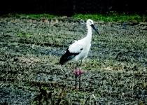 '황새' 때문에 일본에 화난 사람들