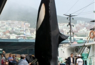 고래, 바다의 로또?