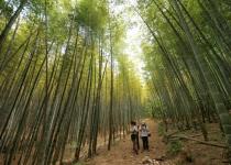 9대에 걸쳐 300여 년 '정성 손길'이 빽빽한 전통숲
