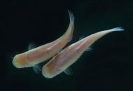캄캄한 동굴 속 눈 잃은 물고기의 하루는 47시간