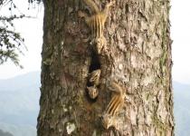 다람쥐 4형제의 마지막 호시절