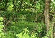 지뢰밭이 지킨 '평화의 숲'…생태계 신비 고스란히