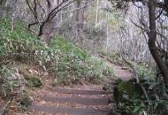한라산 조릿대 비상…'국립공원' 위태