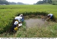 쌀농사는 실지렁이와 깔다구가 짓는다