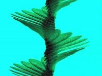 헬리콥터 날개 달린 단풍나무 씨앗