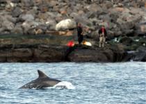 제주 돌고래 위협하는 '죽음의 음파'