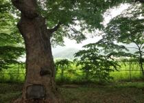 물·바람 길 다스리는 '나무 병풍' 400년 간 마을 지킴이로