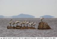 대한민국 보물 이야기 대상에 '저어새가 있는 풍경'