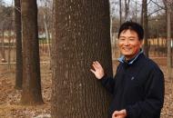 백합나무는 '돈 나무', 지구온난화 지킴이도