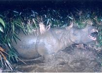 자바코뿔소 멸종이 떠올린 토종 황새 멸종의 기억