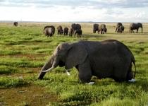 코끼리, 꿀벌만 보면 덩치값 못하고 '벌벌'