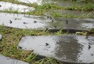 두꺼비 서식지 존폐 기로에 놓여있다