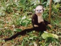 [오늘의 멸종위기종] 톤킨 들창코 원숭이