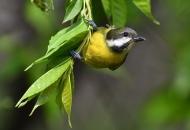 박새는 흔하지만, 흔치않은 노랑배진박새 왔다